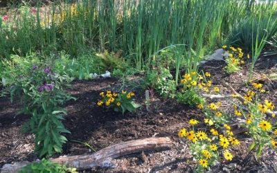 Lutherville Garden Club wins most prestigious national award from the National Garden Clubs for the Monarch Waystation.