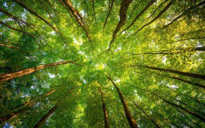 Tree Health with Tyler McKee